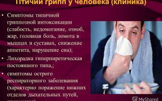 Птичий грипп – симптомы у людей и методы лечения