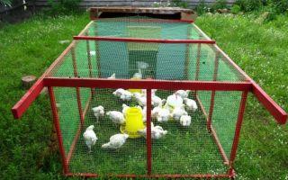 Как сделать летний вольер для куриц своими руками?