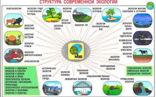 Исследовательские работы по экологии — важнейшие факторы, объединяющие мировую науку