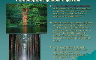 Верховое болото: описание флоры и каких представителей фауны можно встретить в заболоченной местности