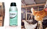 Блохи и вши у цыплят – лечение народными средствами и химическими препаратами