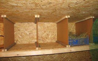 Как построить теплый курятник и грамотно обустроить его?