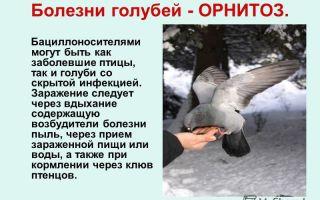 Киров: краткая информация, экологическая ситуация, проблемы и их решение